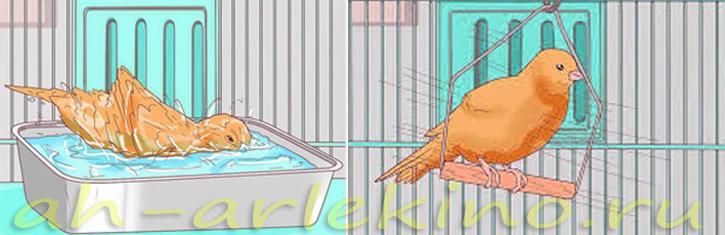 качели для канарейки