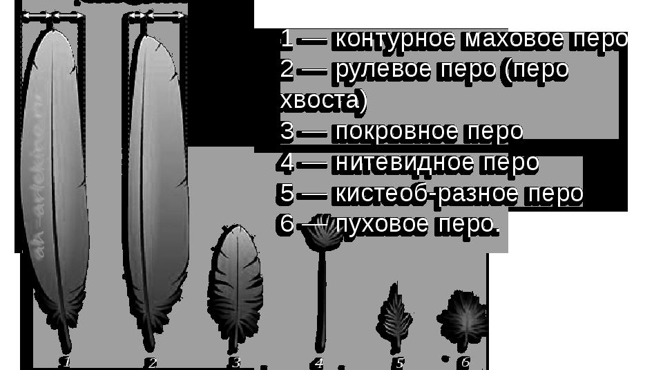 перья канарейки