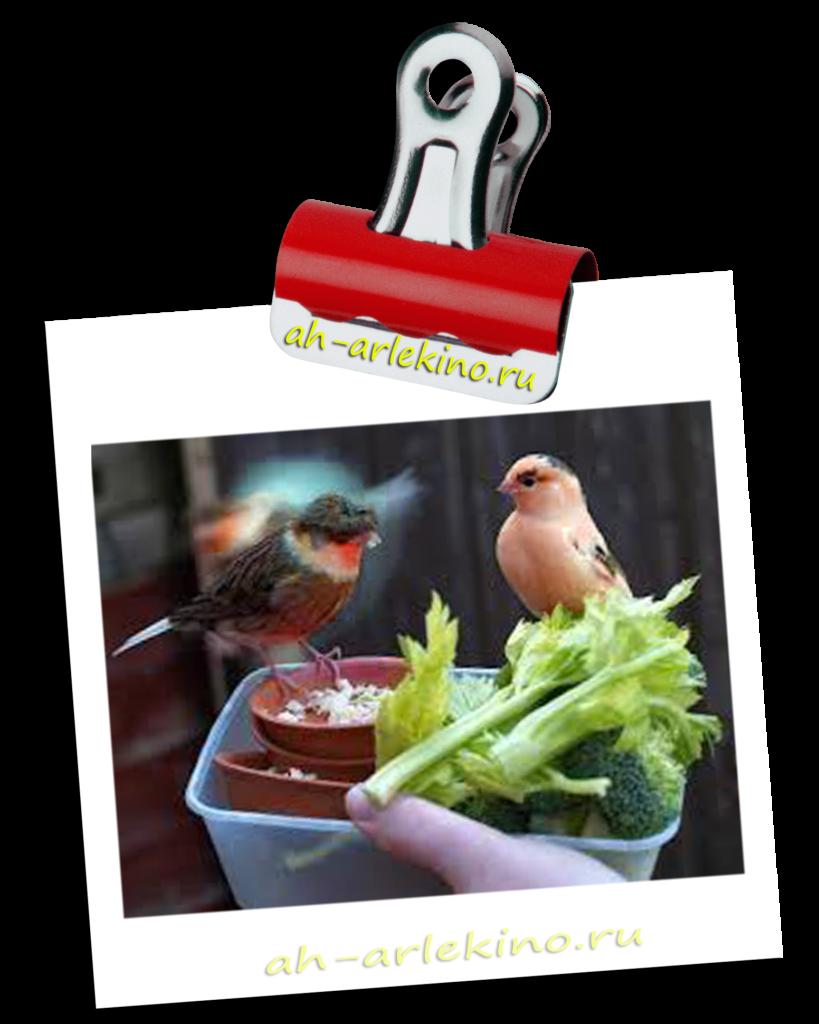 диета ожиревшей канарейки